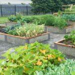 4x12x1 GreenBed - public garden