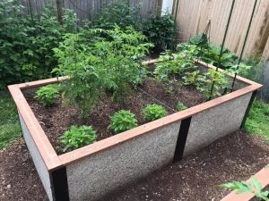 Raised Bed for tomatoes and Basil