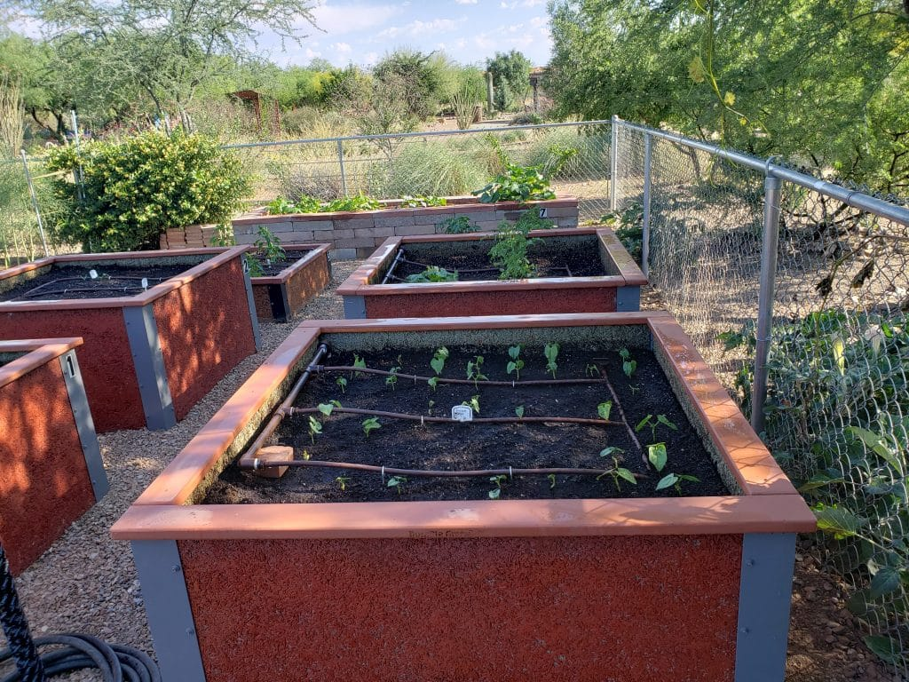 Raised Vegetable Garden Plots for community garden