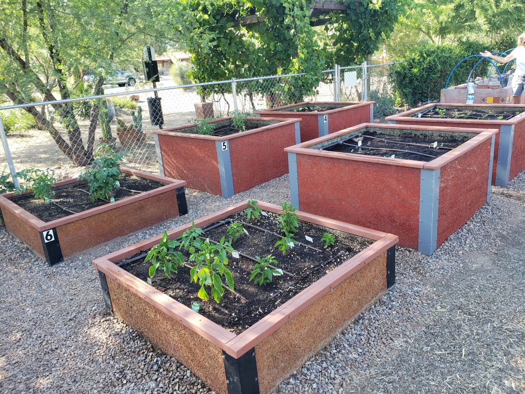Arizona Community Garden Bed