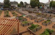 Raised Bed Kits and community gardens school gardens