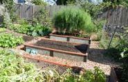 GreenBed-Community-Garden