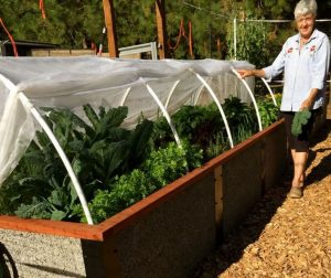 Raised Bed Kit Benefits