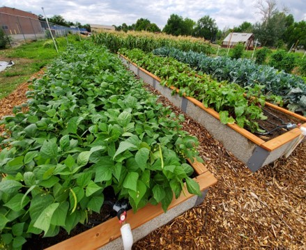 St Andrews community garden raised bed with Durable GreenBed