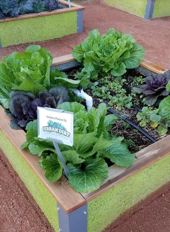 Culinary Chef Raised Garden