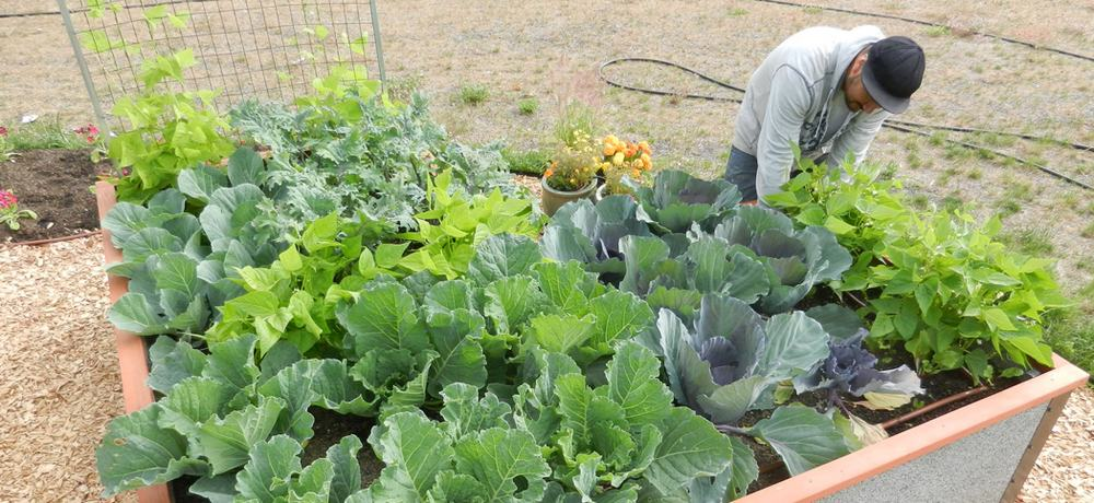 Backyard Gardener - Durable GreenBed