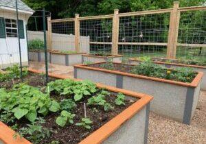 The garden beds at Kirkland Village were filled with a hugelkulture mix.