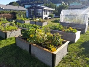 Coastal Raised Garden Bed Master Gardeners